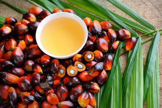 Czy olej palmowy jest zdrowy? Fakty i mity